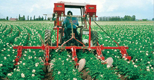 Patates Hasat ve Dikim Makineleri